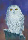 The Snowy Owl, Perched