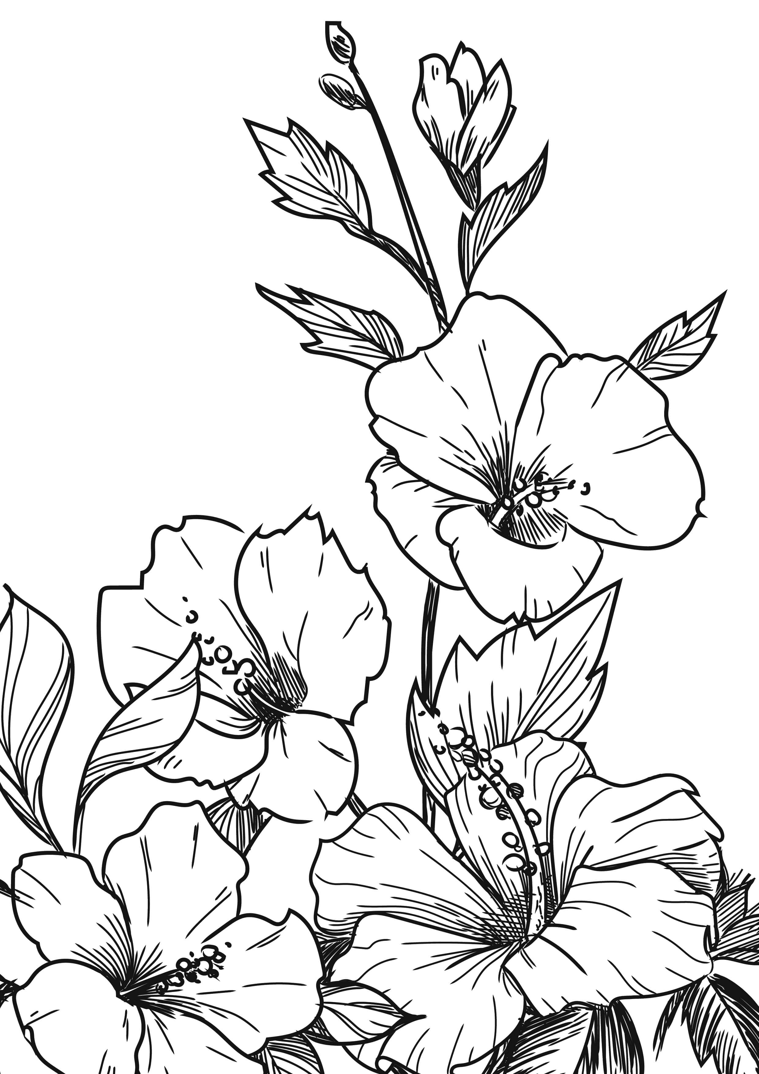 Hibiscus Bouquet coloring pages for adults