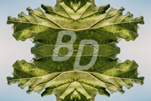 Leaf stock photo - backdropstock.com