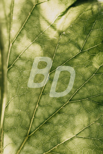 Foliage stock photo - backdropstock.com