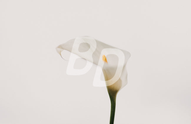 Floral stock photo - backdropstock.com