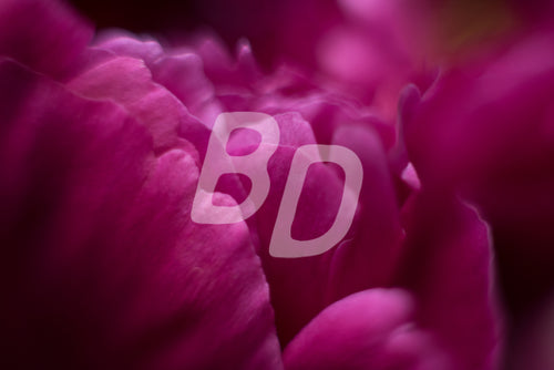 Bloom Stock Photo