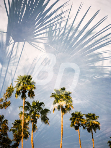 Palm Tree background stock photo - backdropstock.com
