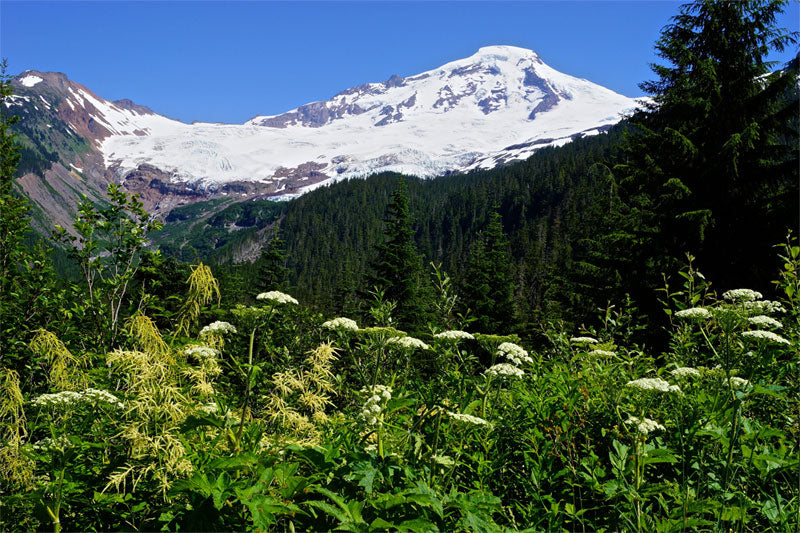 A photo of Mount Baker in Washington - Purely Northwest
