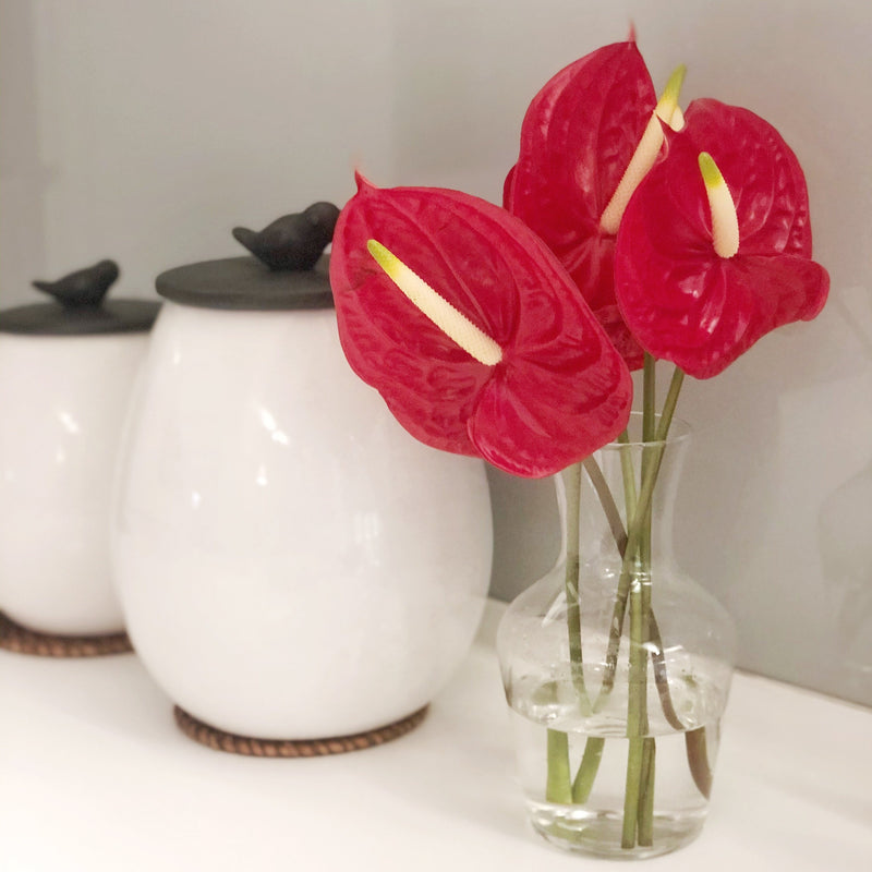 Anthuriums (Bunch of 5)