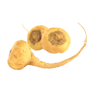 Fresh golden maca roots. One of the ingredients used in Smoov's euphoric blend.