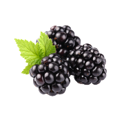 Group of fresh dark purple blackberries with bright green leaves. One of the ingredients used in Smoov's berry exotic blend.