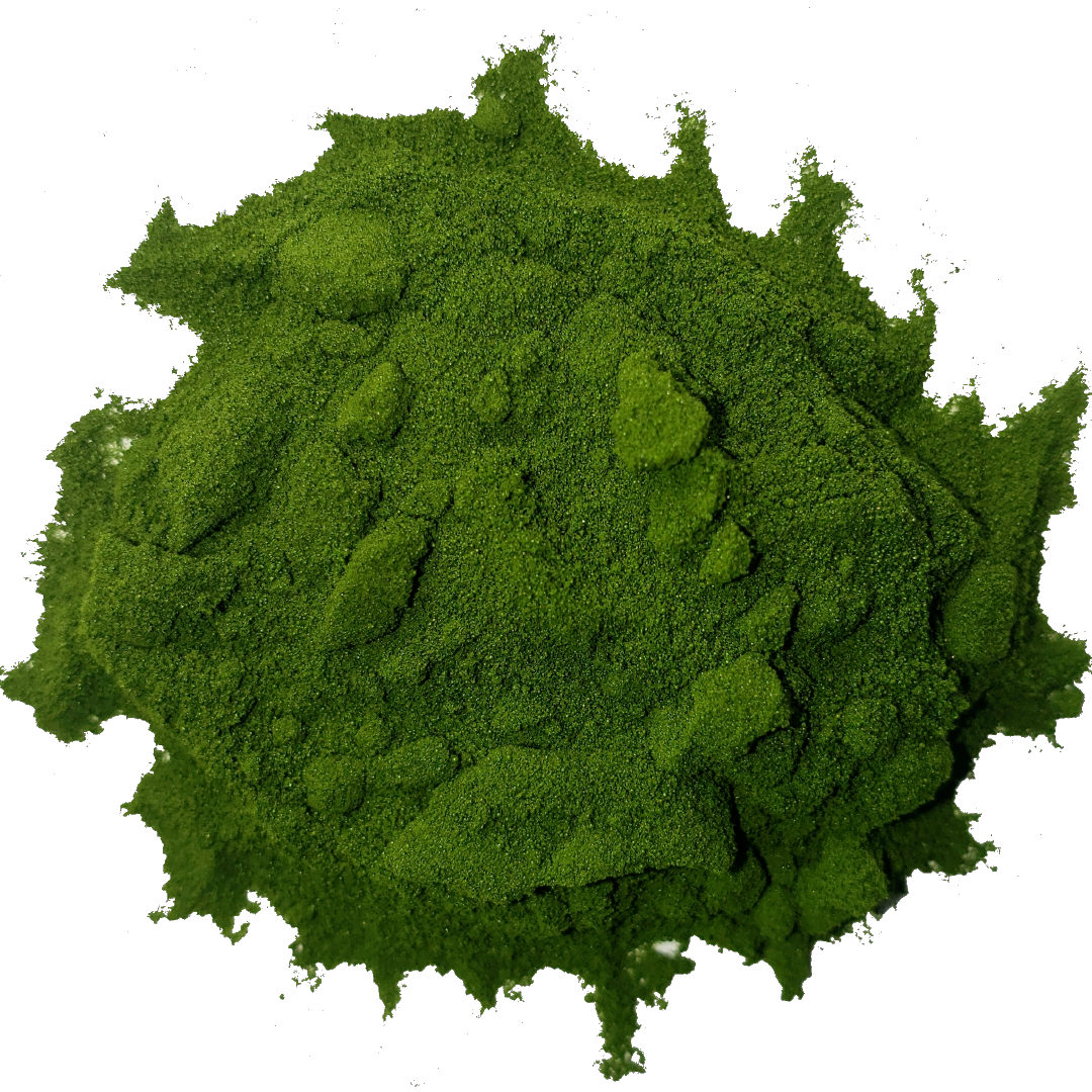 Circle of bright vibrant forest green barley grass juice powder from Smoov Blends. Made from freshly juiced barley grass.