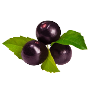 Group of fresh round dark purple maqui berries. One of the ingredients used in Smoov's berry exotic blend.