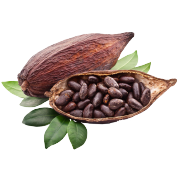 A cacao pod with it's insides exposed to show raw cacao beans. One of the ingredients in Smoov's euphoric blend.