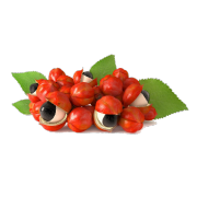 Guarana seeds with their bright red shell split open to show their black seed encased by a white aril. It is one of the ingredient in Smoov's fueld blend.