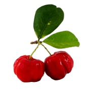 A pair of fresh bright red acerola cherries. One of the ingredients used in Smoov's blush blend.