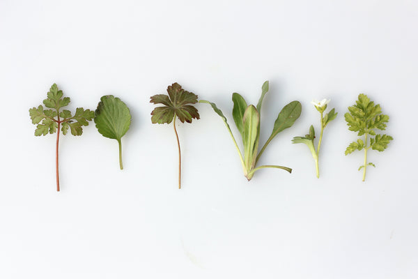 The antiviral herbs you should be taking (and how to make your own herbal infusion)