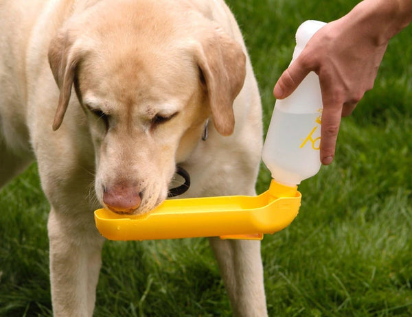 Gulp Dog Drinking Bowl Yellow - Discontinued - Xtra Dog