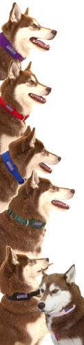 Limited Slip Fleece Collar - Collars - Xtra Dog