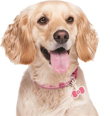 Twigo Pet ID tag - Bone Tie Pink - Pet Tag - Xtra Dog