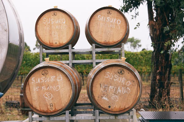Susuro racked barrels in winery - Italian varieties