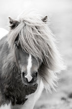 Load image into Gallery viewer, Horse Wall Decor Art Prints