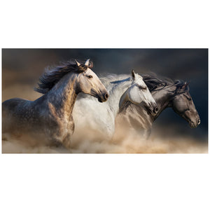 Wild Horse - Gallery Wrap Canvas w/ COA (Various Sizes)