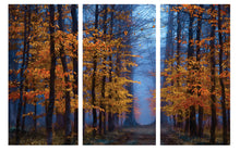 Load image into Gallery viewer, Enchanted Forest - Gallery Wrap Canvas w/ COA (Various Sizes)