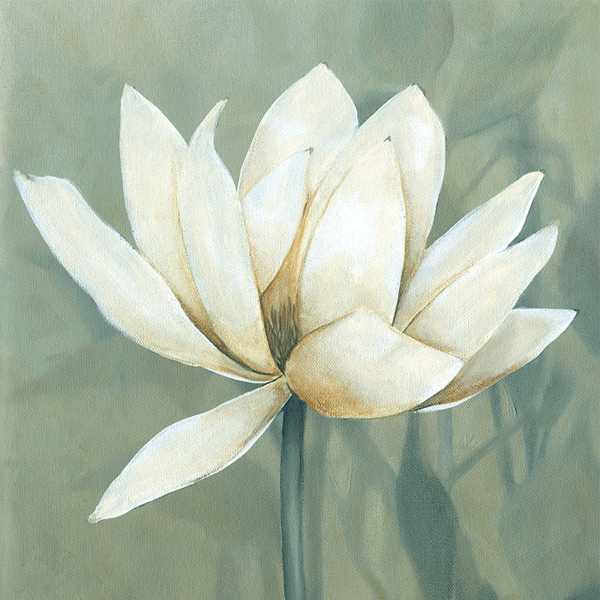 White Flower 6 - Gallery Wrap Canvas w/ COA (Various Sizes)