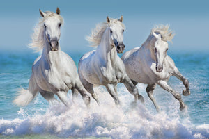 White Horse - Gallery Wrap Canvas w/ COA (Various Sizes)