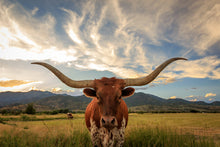 Load image into Gallery viewer, Long Horn Bull - Gallery Wrap Canvas w/ COA (Various Sizes)