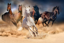 Load image into Gallery viewer, Wild Horse 02 - Gallery Wrap Canvas w/ COA (Various Sizes)