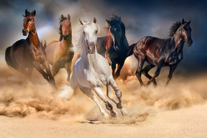 Wild Horse 02 - Gallery Wrap Canvas w/ COA (Various Sizes)