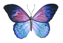 Load image into Gallery viewer, Butterfly  - Gallery Wrap Canvas w/ COA (Various Sizes)