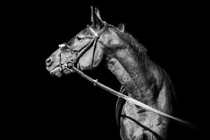Spanish Horse  B&W - Gallery Wrap Canvas w/ COA (Various Sizes)