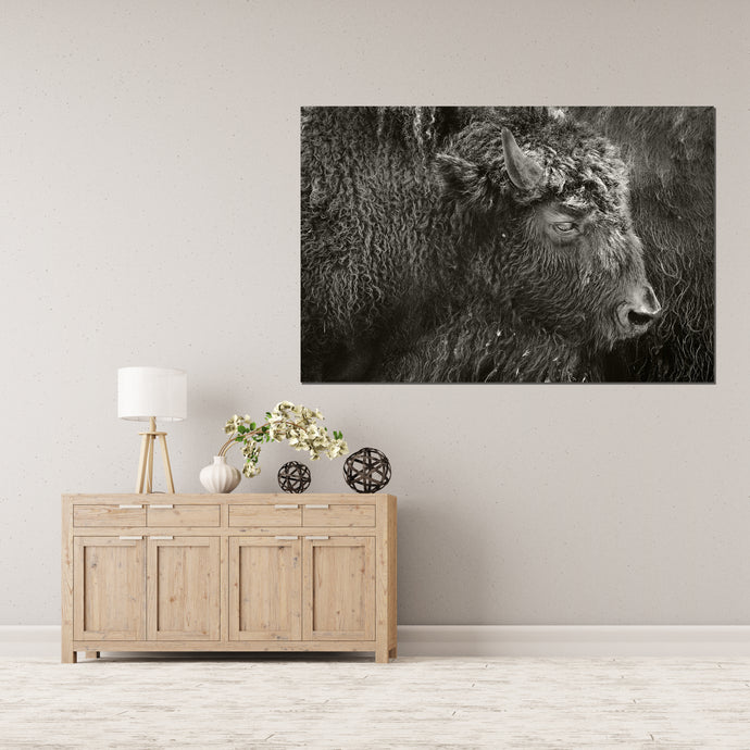 Bison B&W - Gallery Wrap Canvas w/ COA (Various Sizes)