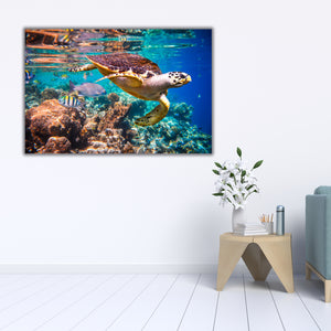 Sea Turtle Swing 3 - Gallery Wrap Canvas w/ COA (Various Sizes)
