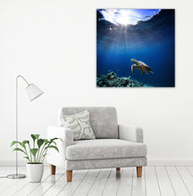 Load image into Gallery viewer, Sea Turtle Swim 4 - Gallery Wrap Canvas w/ COA (Various Sizes)