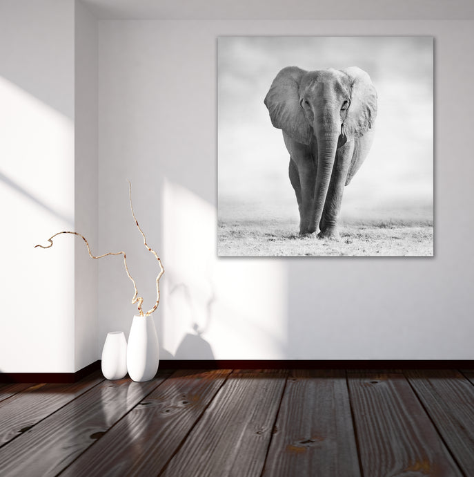 African Elephant 5 - Gallery Canvas w/ COA (Various Sizes)