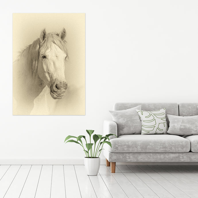 White Horse 01 - Gallery Wrap Canvas w/ COA (Various Sizes)