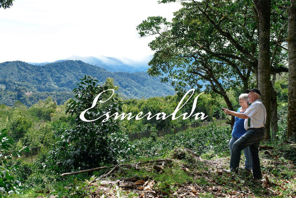 Hacienda La Esmeralda | Geisha Natural Private Collection | Panama - Wolff Coffee Roasters Specialty