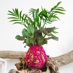 Parlour Palm x Red Nerve Koke-Bouquet