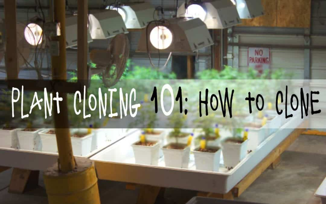 Plant Cloning 101: How to Clone