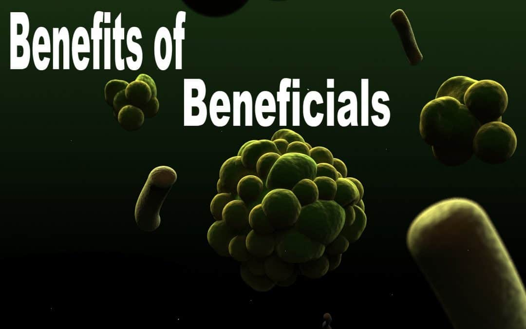 The Top 5 Beneficial Bacteria for Plants