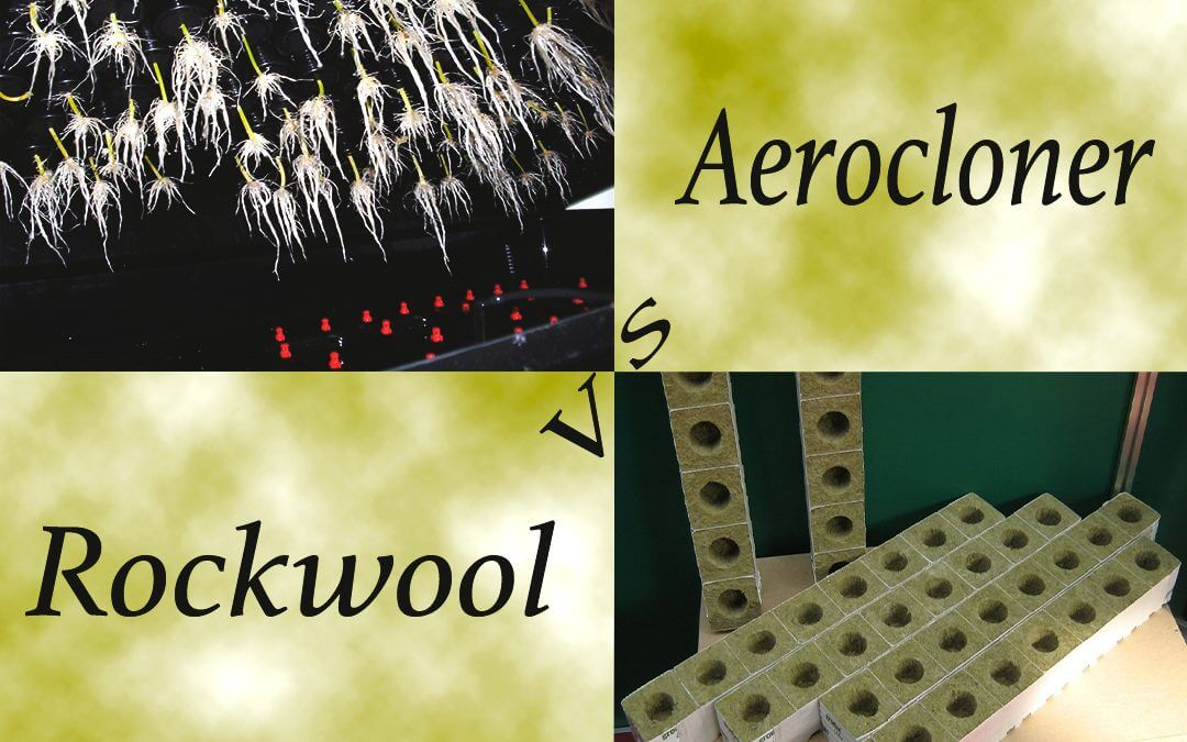 Rockwool vs Aerocloner