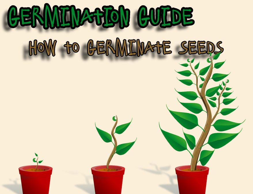 Germination Guide: How to Germinate Seeds