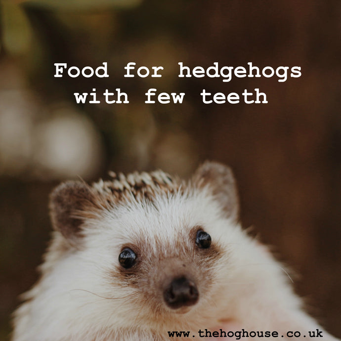 Food for hedgehogs with few teeth