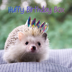 HUFFY BIRTHDAY: Hedgehog Birthday Box. Birthday gifts and props.