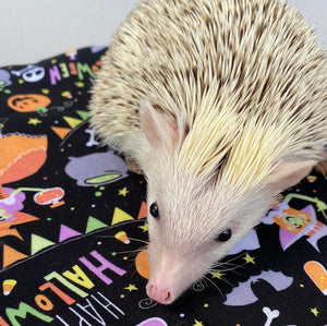 Happy Halloween hedgehog padded bonding bag, carry bag for hedgehog.