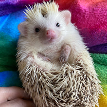 Load image into Gallery viewer, Rainbow cuddle fleece handling blankets for hedgehogs and small pets.