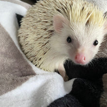 Load image into Gallery viewer, Zigzag cuddle fleece handling blankets for hedgehogs and small pets.