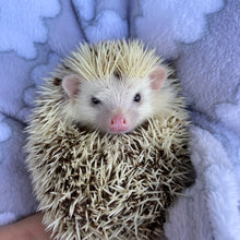 Load image into Gallery viewer, Clouds cuddle fleece handling blankets for hedgehogs and small pets.