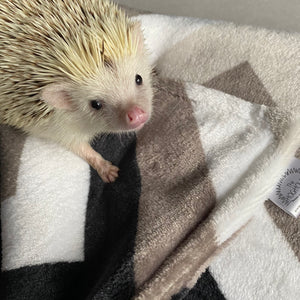 Zigzag cuddle fleece handling blankets for hedgehogs and small pets.