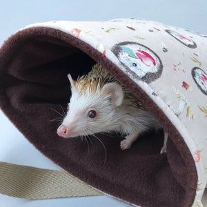 african pygmy hedgehog bed
